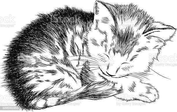 Sketchy kitty vector id538565955?b=1&k=6&m=538565955&s=612x612&h=0z uxemalpeeraz1yb6v7bpam6lb3qjsdhm68cksxys=