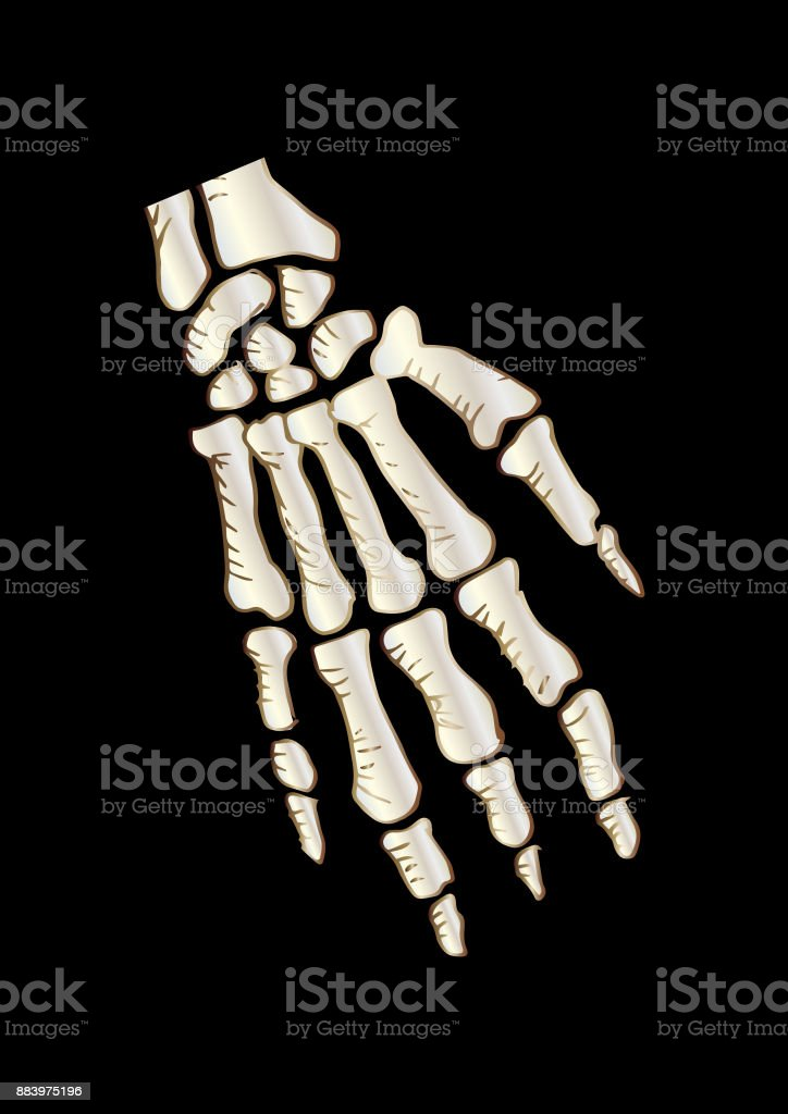 Sketchy of Bones  the Human Hand vector art illustration