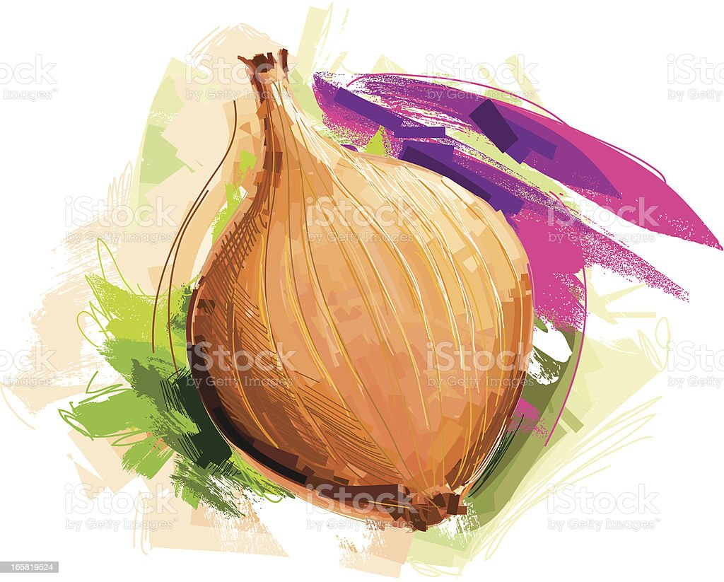 sketchy onion royalty-free stock vector art