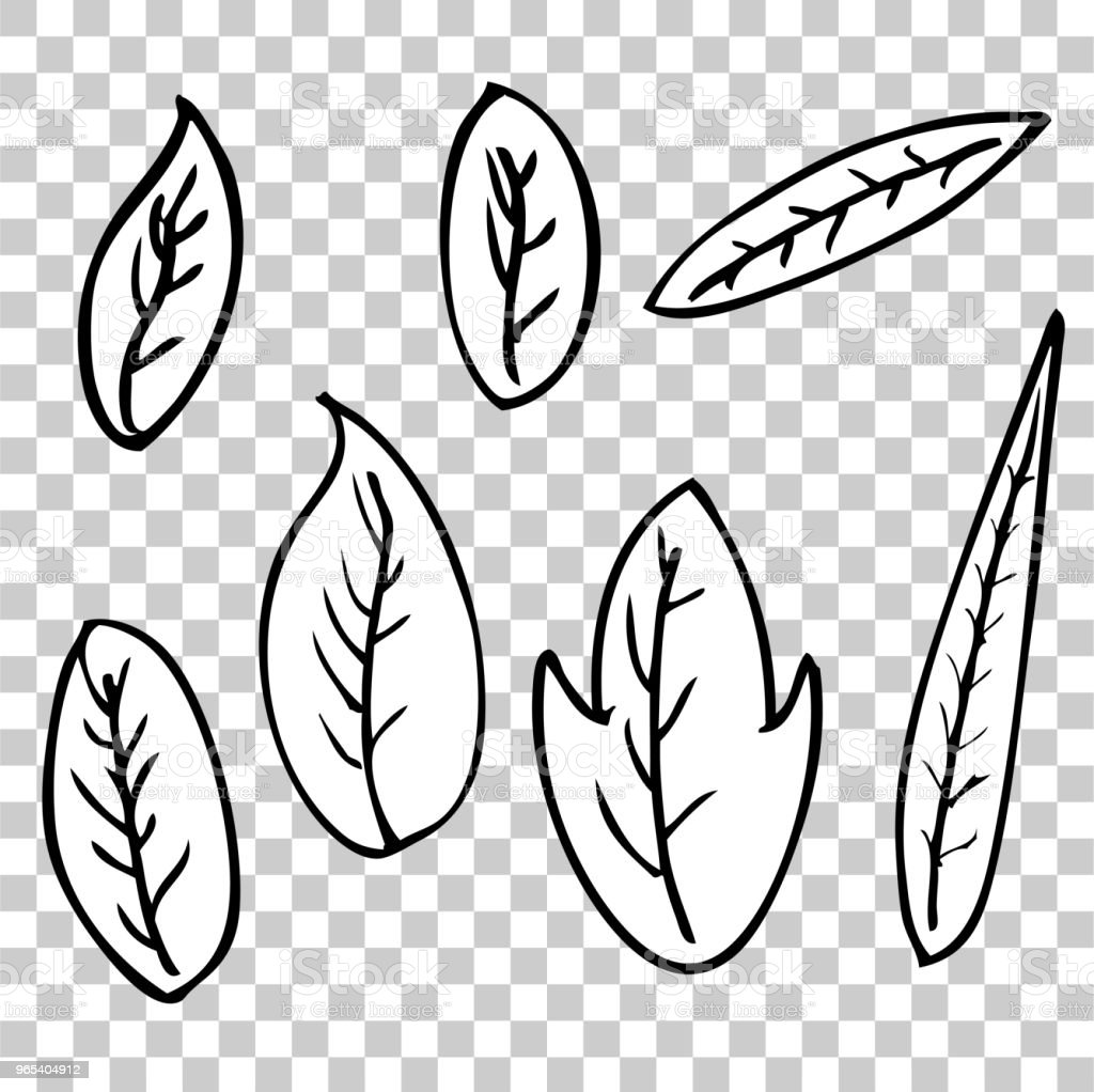 sketchy outline of leafs for your element design at transparent effect background royalty-free sketchy outline of leafs for your element design at transparent effect background stock vector art & more images of abstract