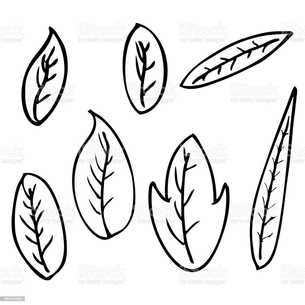 sketchy outline of leafs for your element design royalty-free sketchy outline of leafs for your element design stock vector art & more images of abstract