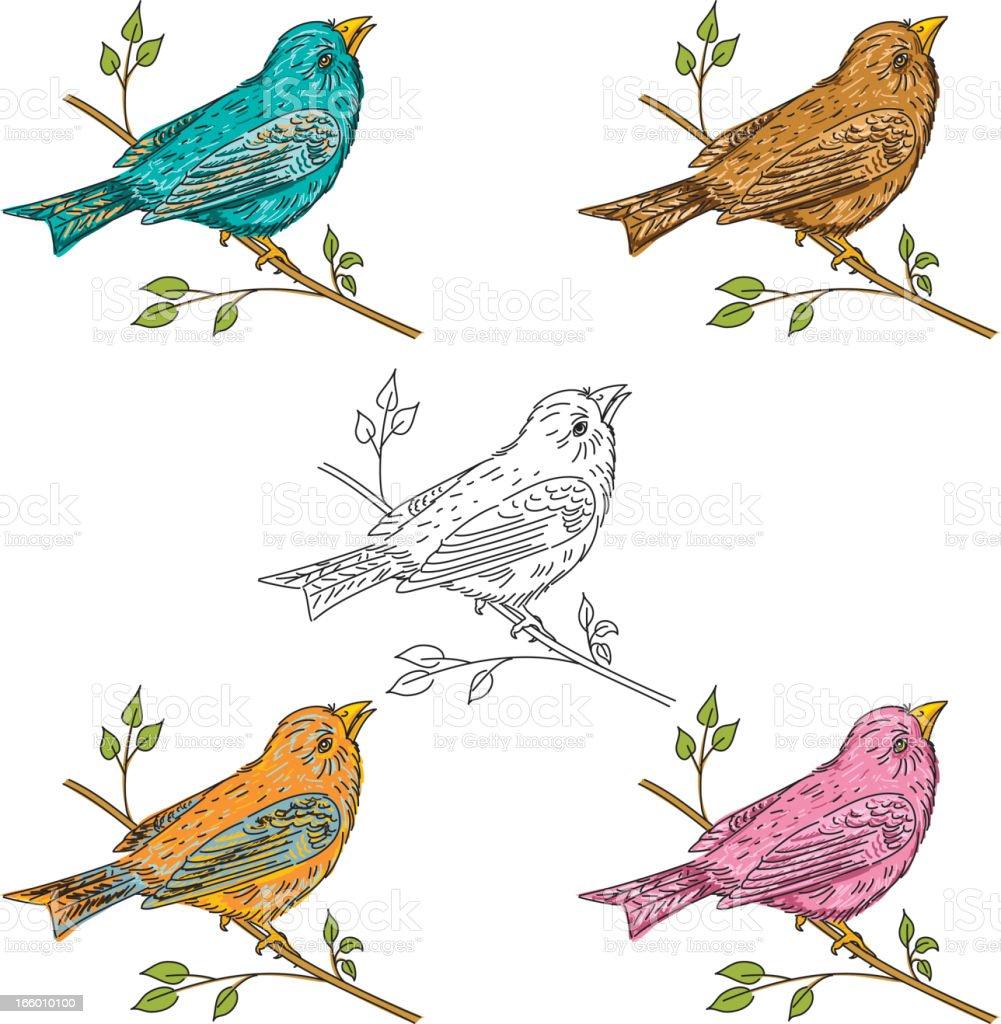 Sketchy Song Birds royalty-free stock vector art