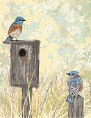 Sketchy Style Bluebirds And Birdhouse