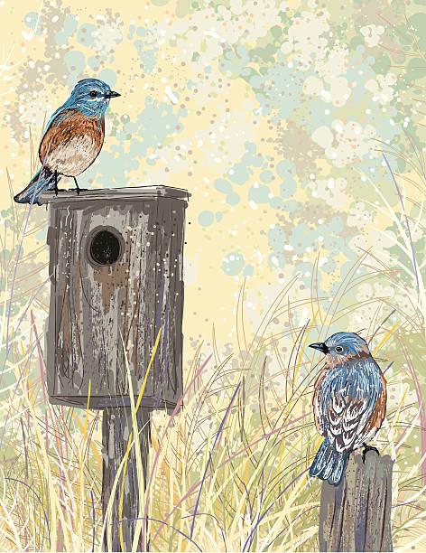 Sketchy Style Bluebirds And Birdhouse vector art illustration