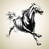 Sketh of horse