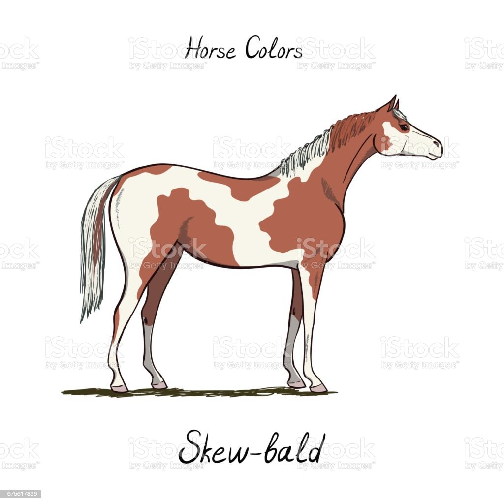 royalty free paint horse clip art vector images illustrations rh istockphoto com Horse Outline Horse Outline