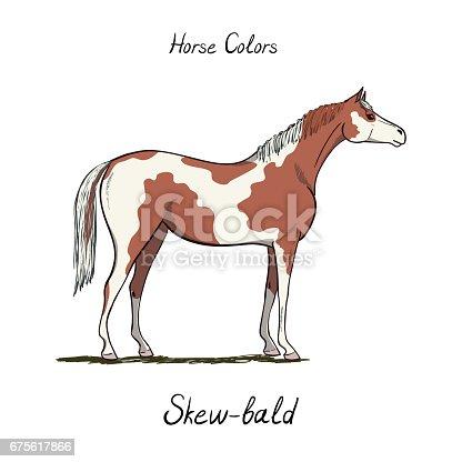 Skew Bald Horse Color Chart On White Equine Coat Colors ...