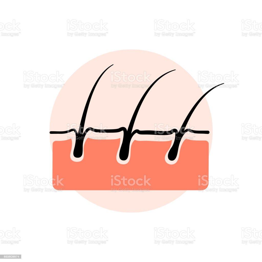 Haut Schicht Und Haarwurzelvektor Stock Vektor Art und mehr Bilder ...