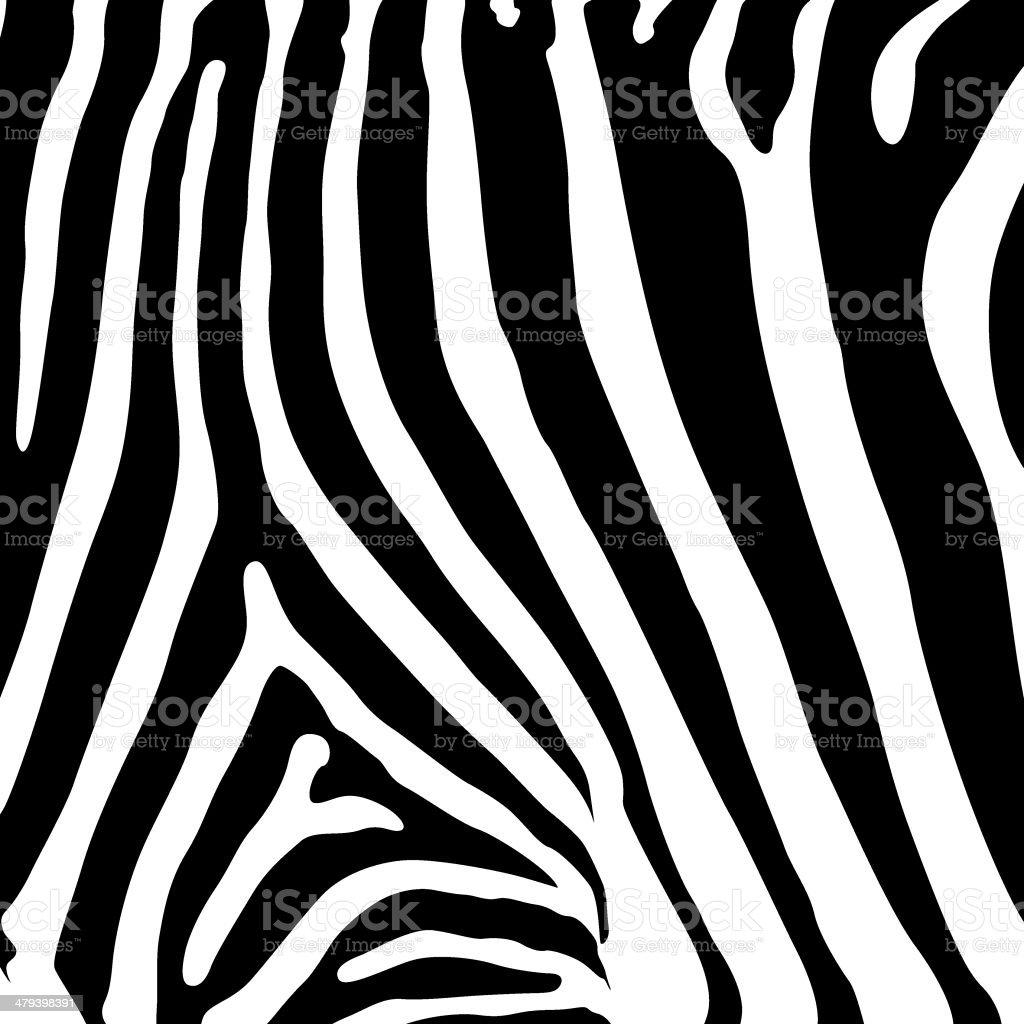 Skin of a zebra (vector)
