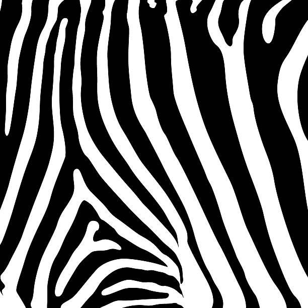 ilustrações de stock, clip art, desenhos animados e ícones de pele de zebra (vector - padrões zebra
