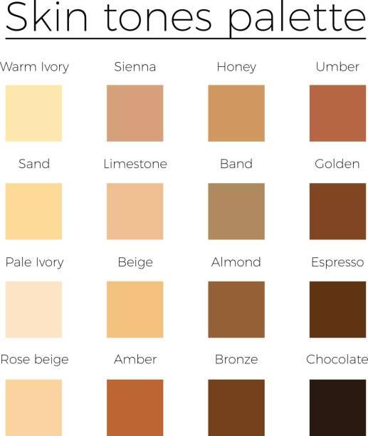 Skin tones color palette vector Skin tones color palette vector   skin color vector chart toned image stock illustrations
