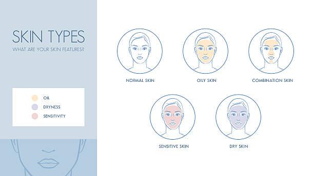 stockillustraties, clipart, cartoons en iconen met skin types - menselijke huid