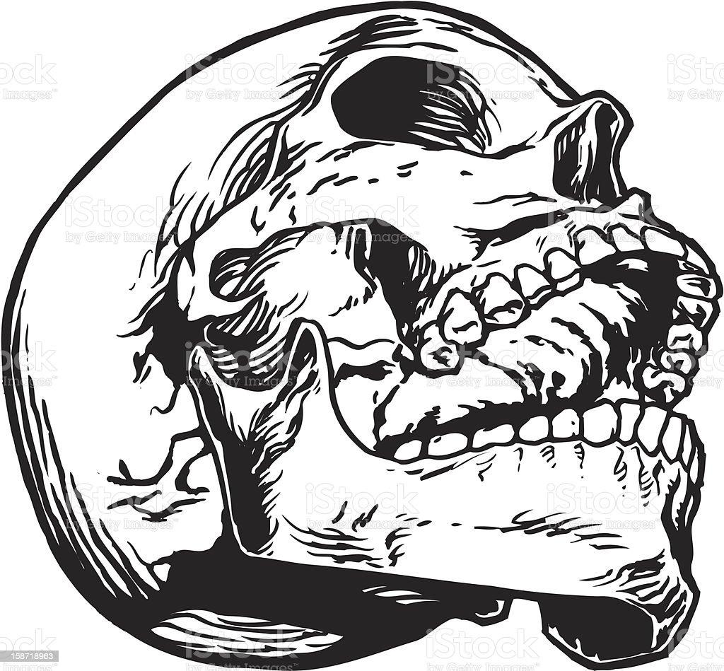 Skull 1 royalty-free stock vector art