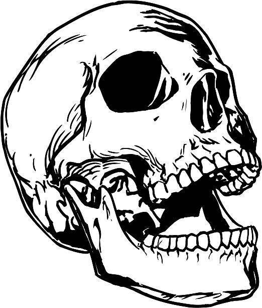 Skull 5 vector art illustration