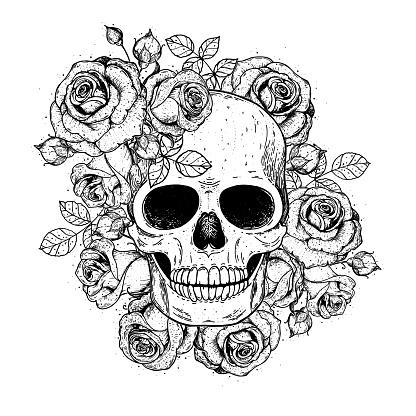 Skull and flowers hand drawn illustration. Tattoo vintage print. Skull and roses.