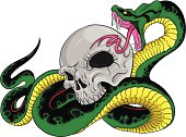 Snake about to bita a skull, color vector design.