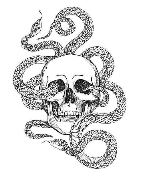ilustraciones, imágenes clip art, dibujos animados e iconos de stock de cráneo y flexible. ilustración de vectores vintage - tatuajes de serpientes