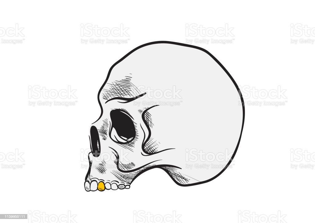 Skull Draw With Gold Toothtattoo Pencil Art Vector Stock Illustration Download Image Now Istock