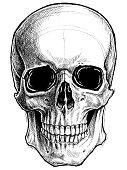 Skull Drawing line work vector.