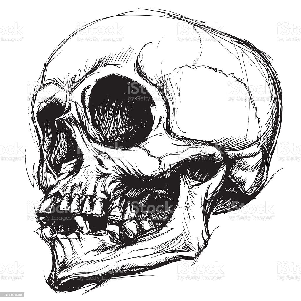 Drawing Vector Lines In Photo : Skull drawing line work vector stock art more