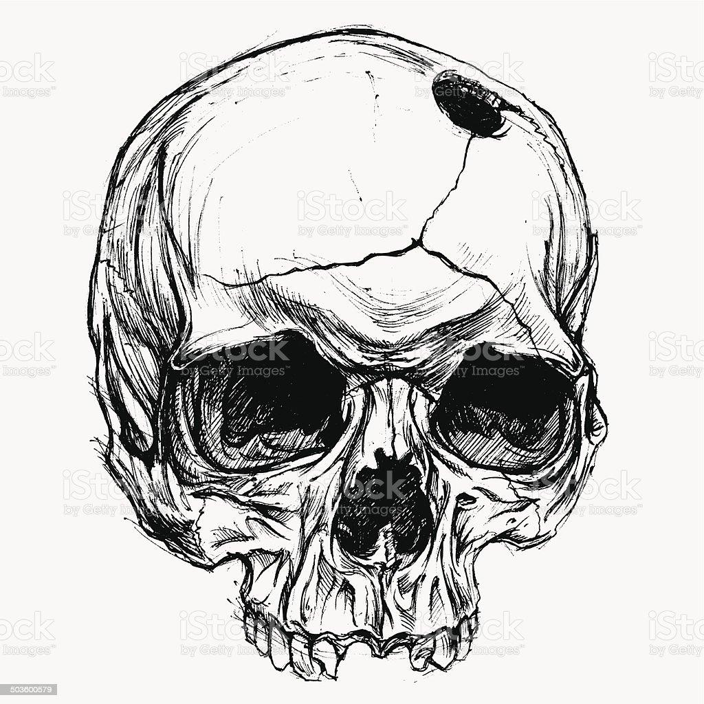 Skull Drawing vector art illustration