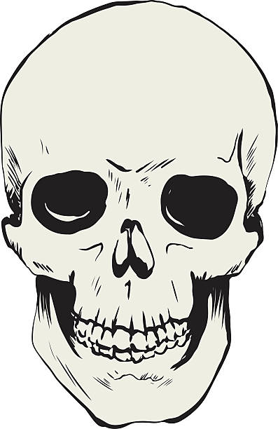 Skull drawing vector art illustration