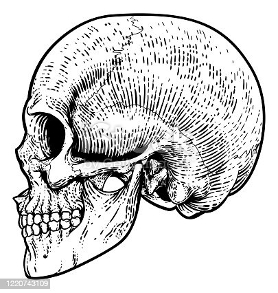 Skull Grim Reaper Vintage Woodcut Illustration