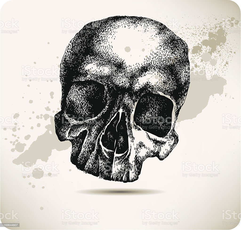 Skull hand drawing. Vector illustration. royalty-free stock vector art