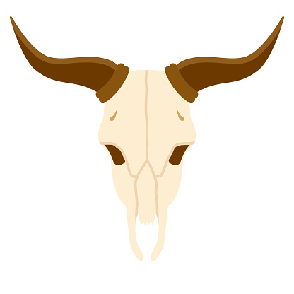 Skull Icon on Transparent Background