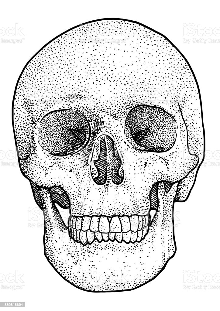 f5e58e34ab8be Skull illustration, drawing, engraving, ink, line art, vector royalty-free