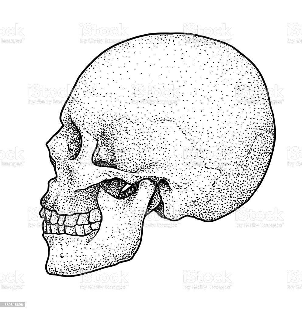 Beste Anatomie Strichzeichnungen Bilder - Menschliche Anatomie ...