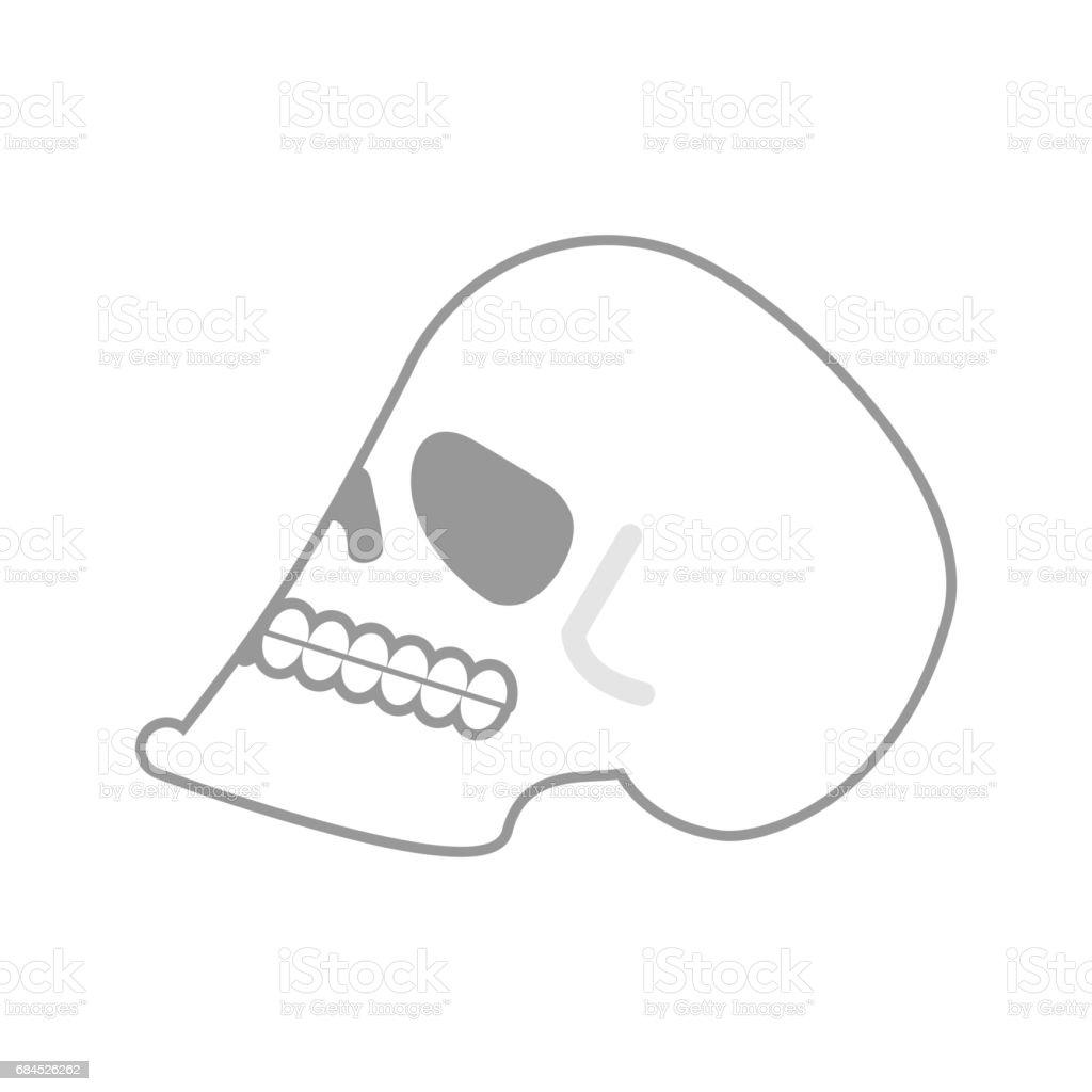 Schädel Isoliert Leiter Des Menschlichen Skeletts ...