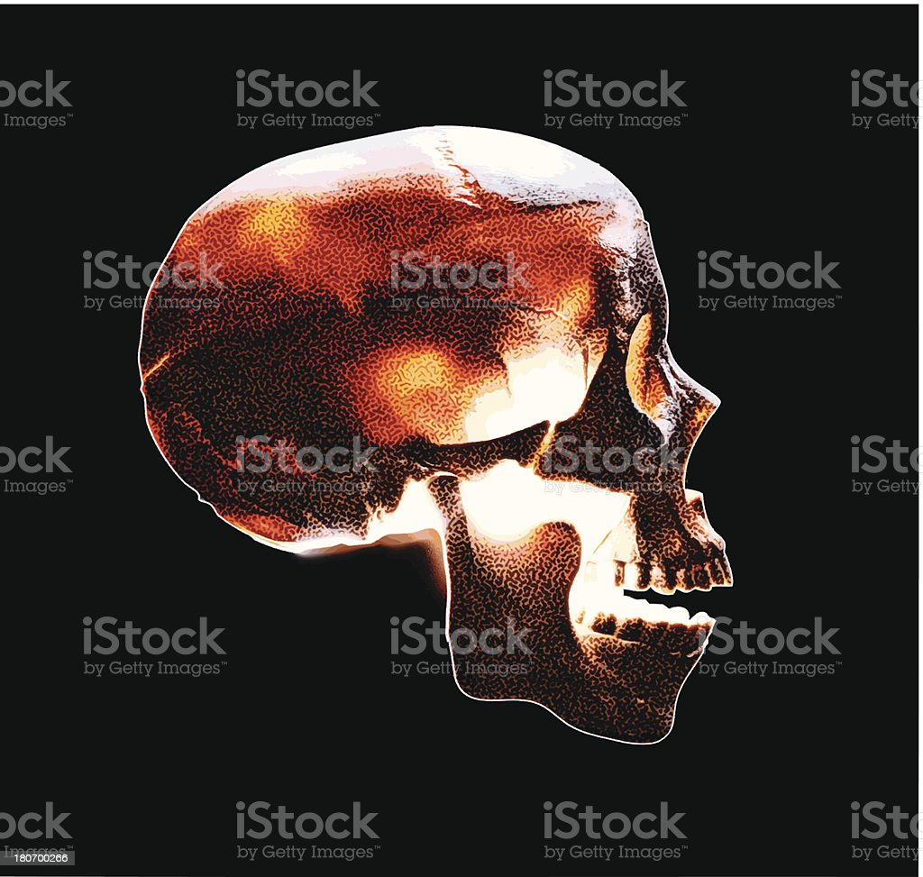 Skull Side View Color royalty-free stock vector art