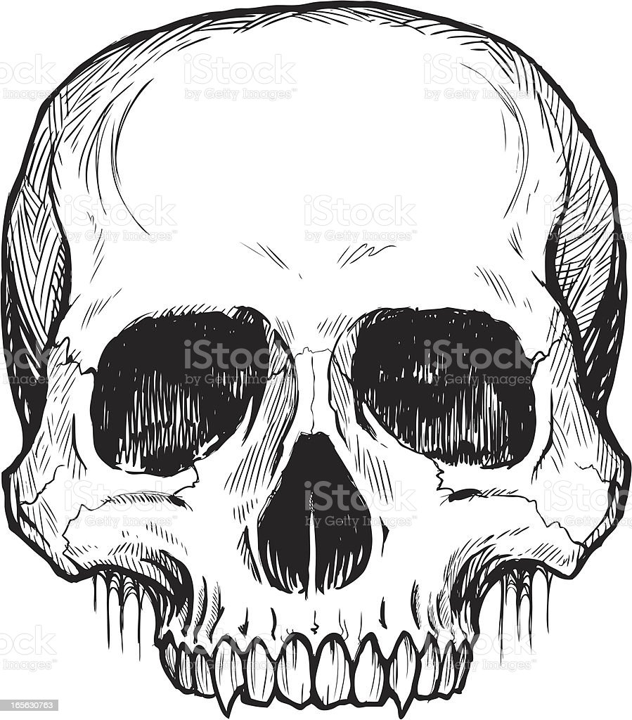 Skull Line Drawing Easy : Skull simple bampw stock vector art more images of