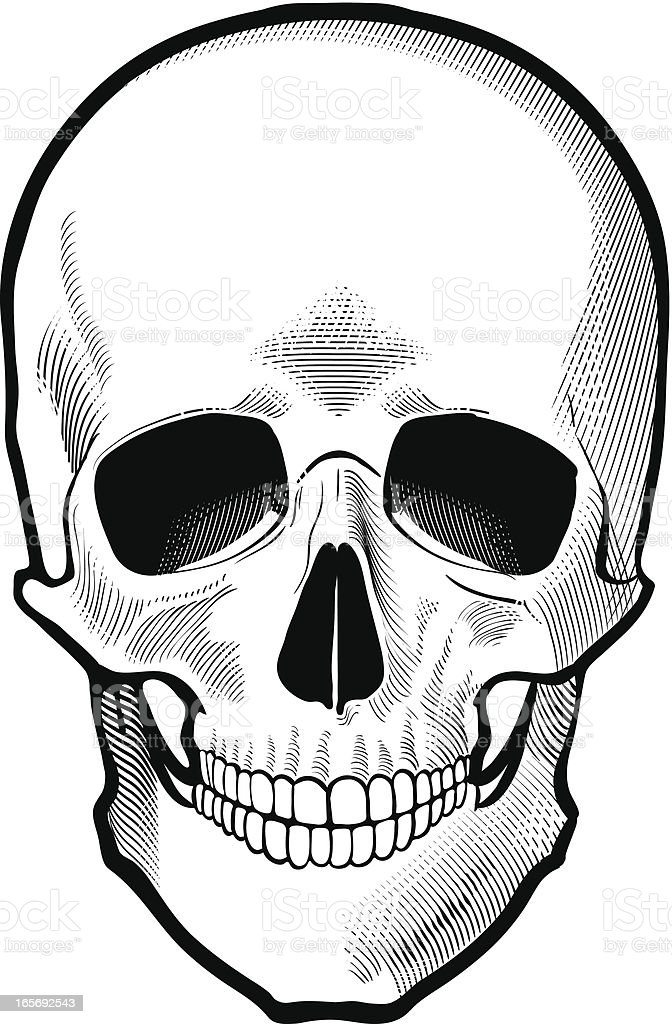 skull royalty-free skull stock vector art & more images of anatomy