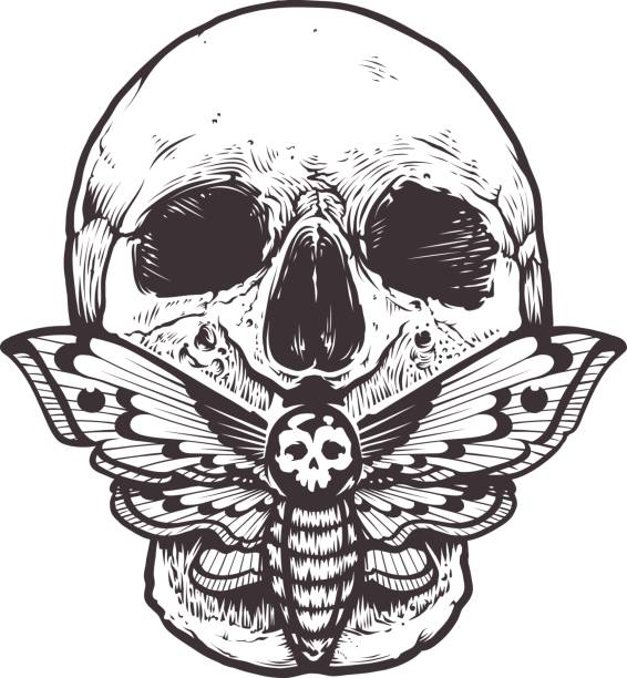 Skull with Moth Vector Skull with deaths head hawk moth sitting on his mouth. Tattoo style graphic design. Monochrome vector illustration isolated on white. voodoo stock illustrations