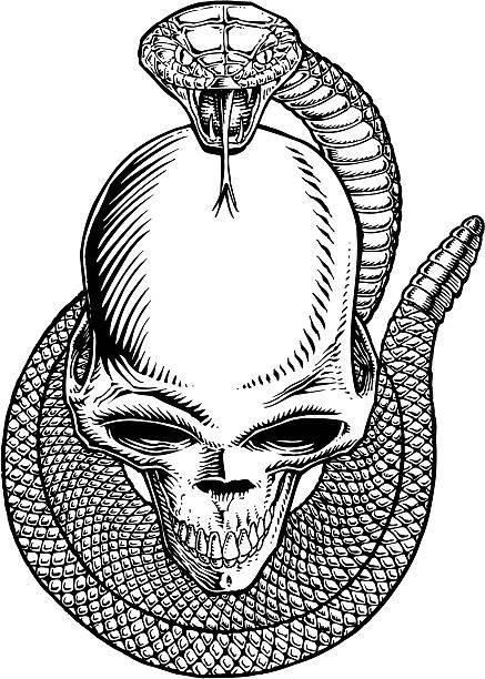 Skull wrapped in snake vector art illustration
