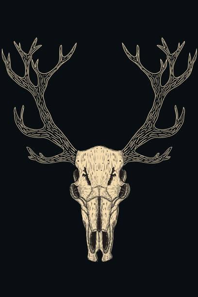 skulls of animals - animal skull stock illustrations