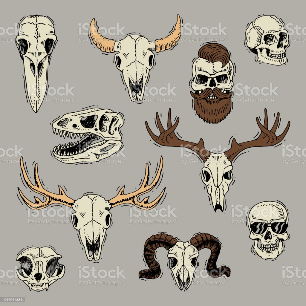 Skulls Vector Boned Head Of Animals Of Bull Goat Or Sheep And Human