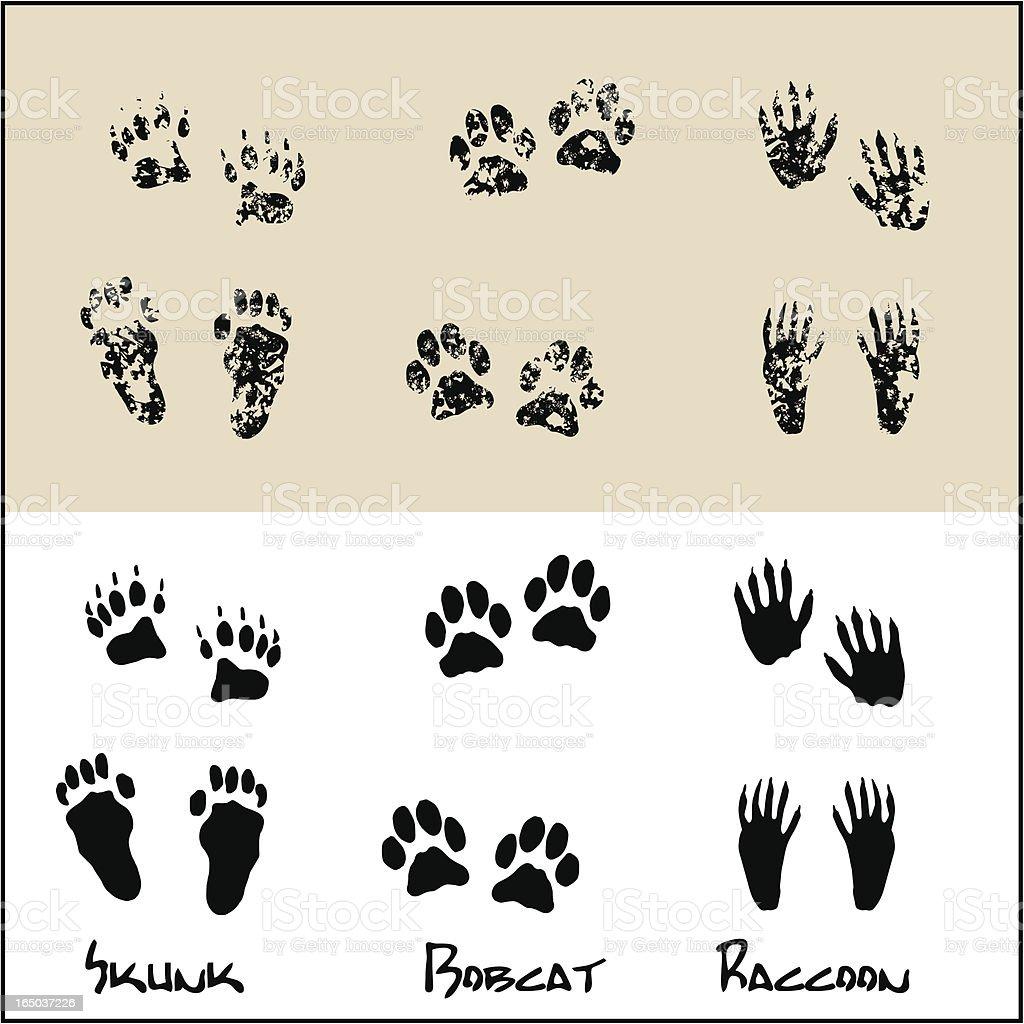 Skunk - Bobcat - Raccoon vector art illustration