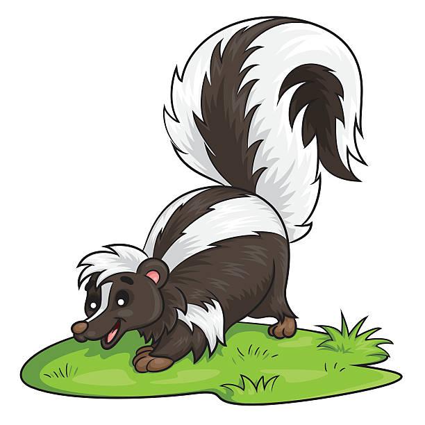 skunk cartoon - skunk stock illustrations