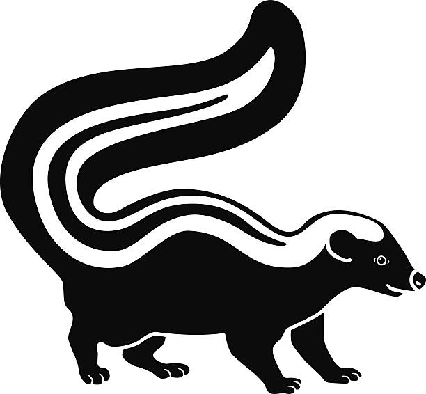 skunk side view in black and white A vector illustration of a skunk side view in black and white. An EPS file and a large jpg are included in this download. skunk stock illustrations