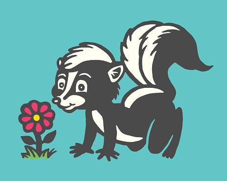 Skunk Smelling a Flower