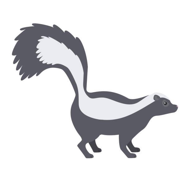 Skunk. Skunk. Isolated vector illustration skunk stock illustrations