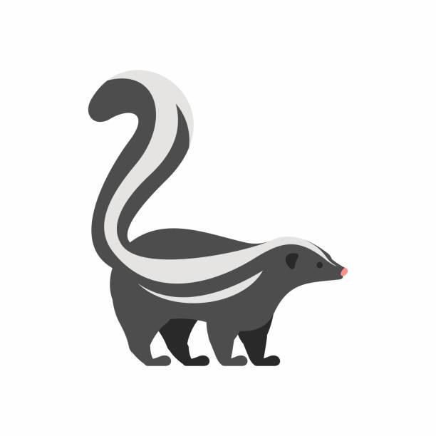 skunk - skunk stock illustrations