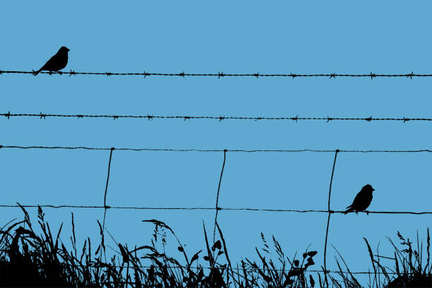 Skylarks Resting on a Barbed Wire Fence vector art illustration