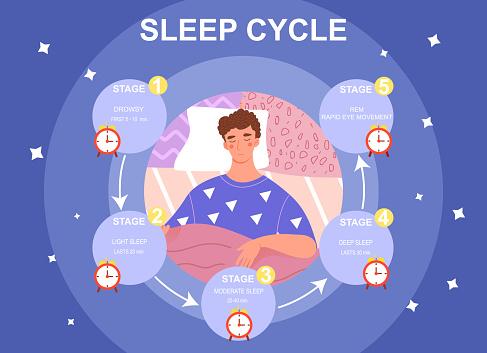 Sleep cycle infrographics