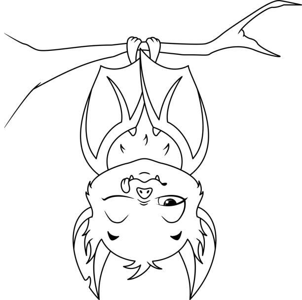 sleeping bat 스톡 사진 및 일러스트 - istock