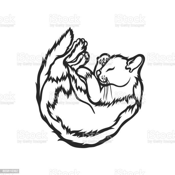 Sleeping cat curled up with his eyes closed sketch vector vector id859816362?b=1&k=6&m=859816362&s=612x612&h=rq5g8n6gxrvmt7ydlzqzid2jes lq7yn x5g yls4wk=
