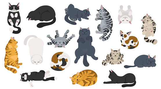 Sleeping cats poses. Flat different color simple style design